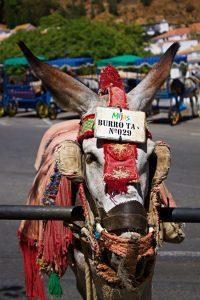 Mijas donkey taxi - the donkeys of Mijas