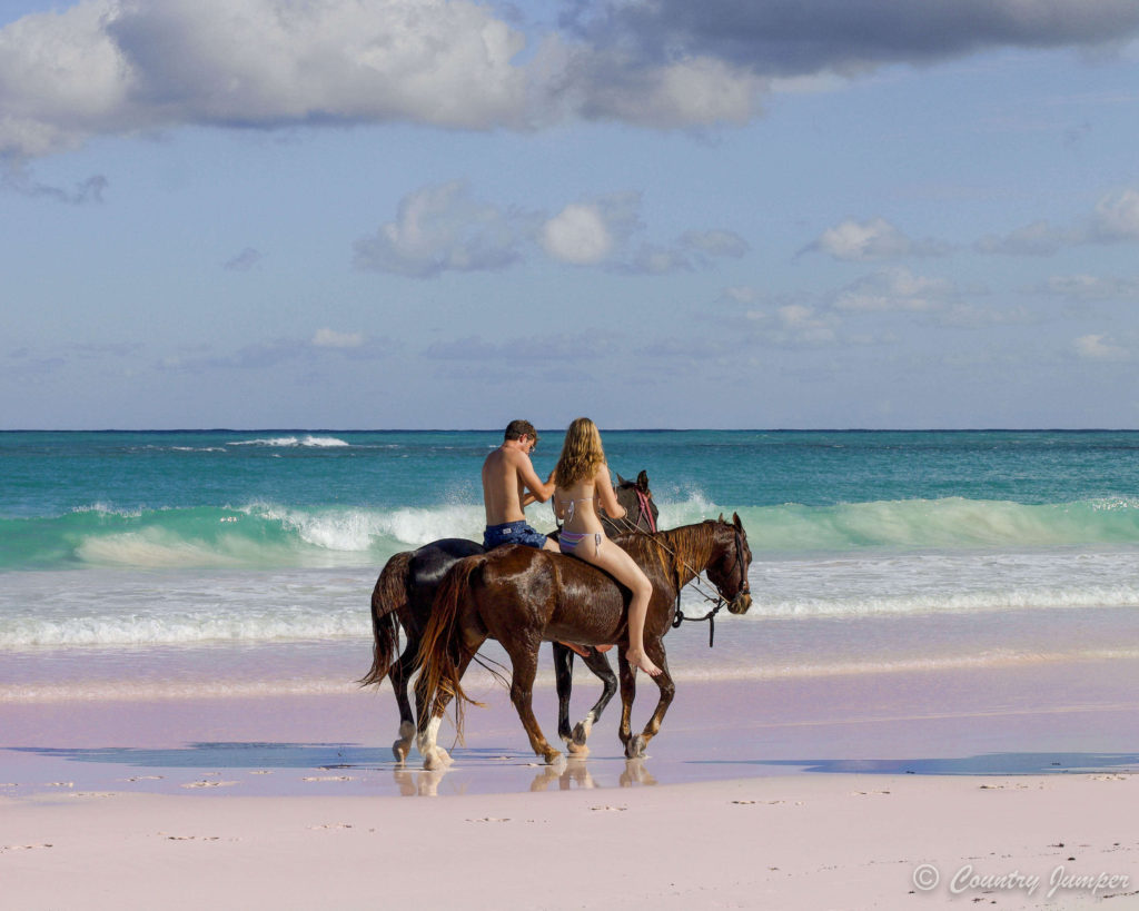 Horseback Riding on The Pink Sands Beach Harbour Island Bahamas