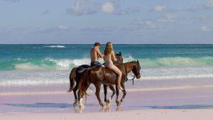 Horseback Riding on The Pink Sands Beach Harbour Island The Bahamas