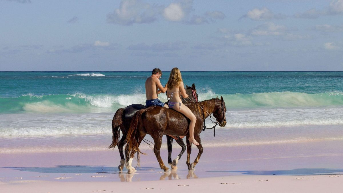 Horseback Riding on The Pink Sands Beach Harbour Island The Bahamas