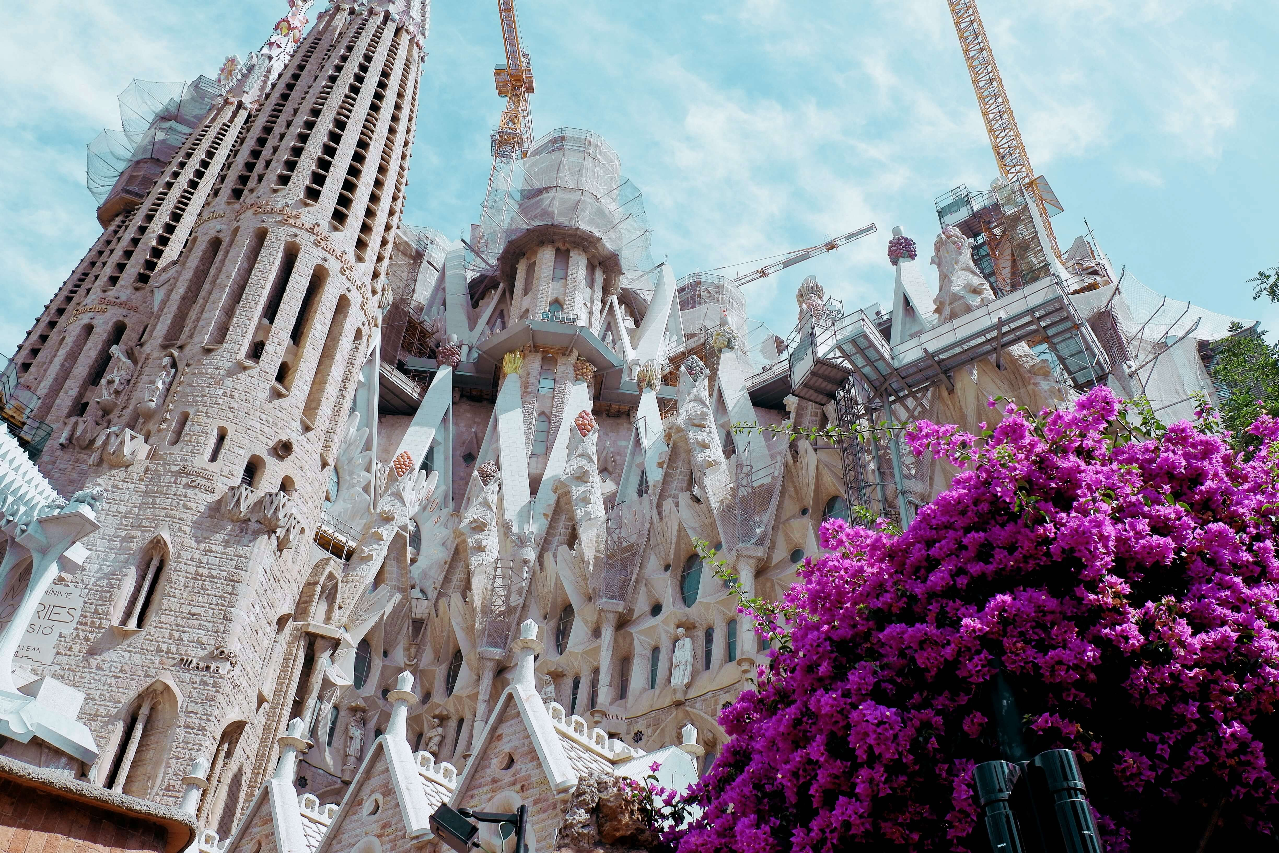 Looking up at the Sagrada Familia with purple flowers in the corner