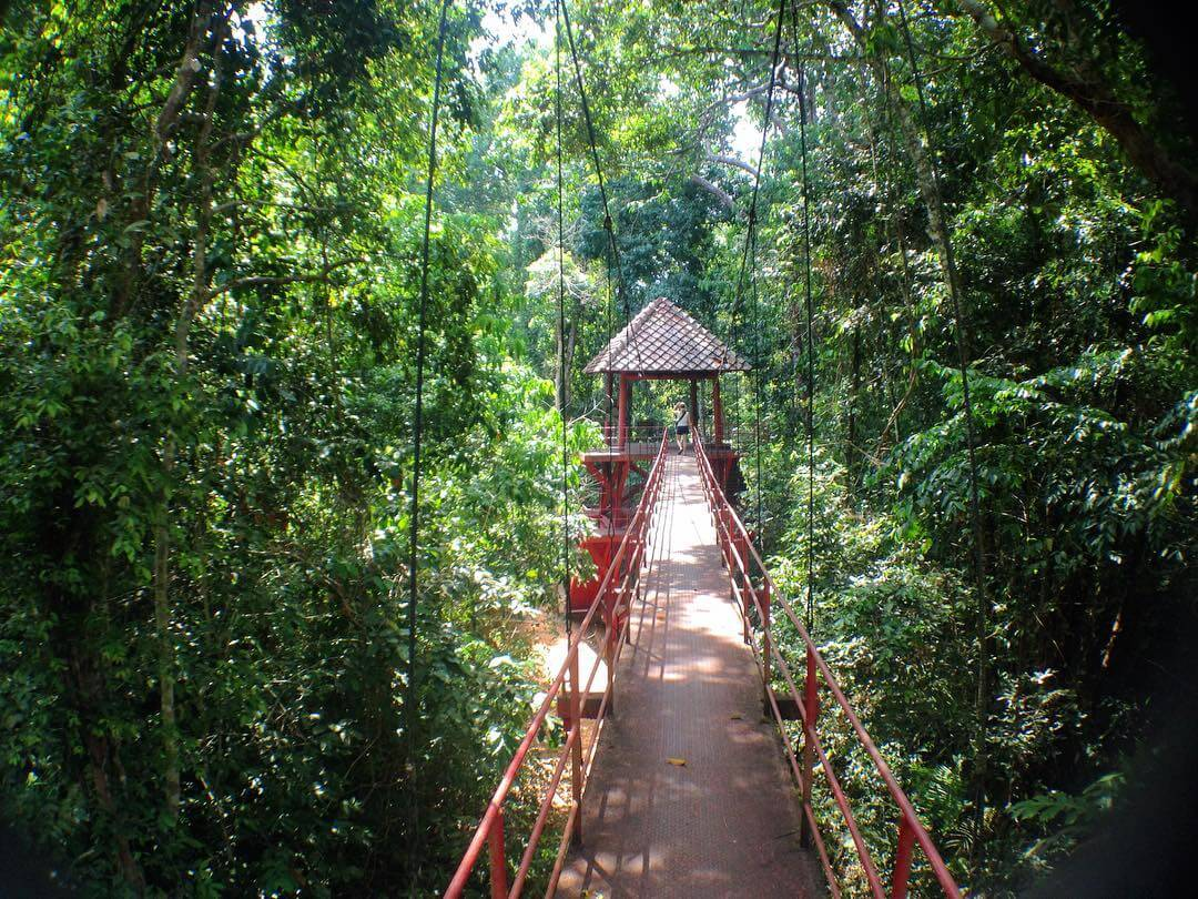Bridge through the forest in Trang Thailand