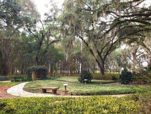 tress in park in ocala florida