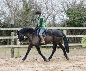 girl in Charles one helmet trotting dark brown pony in Ireland around arena