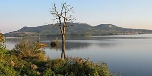 a single tree in front of Věstonice Reservoir in Czechia, in front of mountains