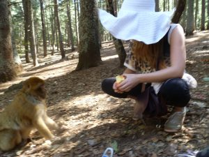 Feeding monkeys in Ifrane, Morocco